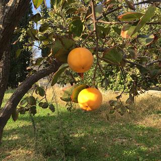 Fruit of Life - Individuation.