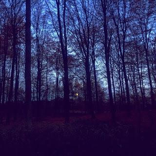 Trees speaking at dusk