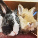 Rabbits saying hi!